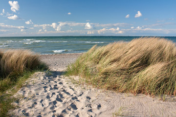 Fototapete - Weg zum Strand durch Dünen an der Ostsee bei Heiligenhafen