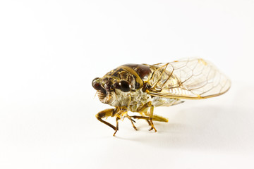the cicada on paper background