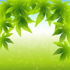 frühling,grün,licht,blase,ahornblätter,baum,landschaft,garten
