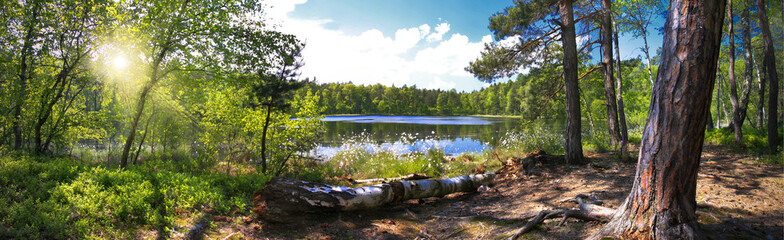 Fototapeten Wald Leśna panorama nad brzegiem jeziora