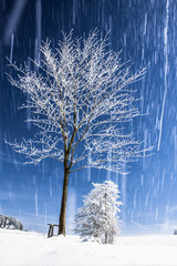 Winter Landscape with Tree and Snow