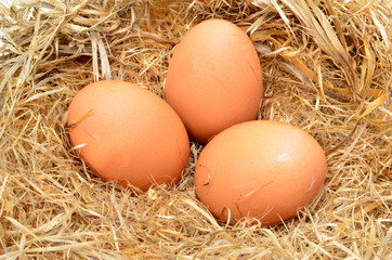 a pile of brown eggs in a nest