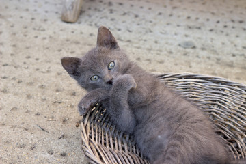 Funny Kitten making a cute pose with paws crossed