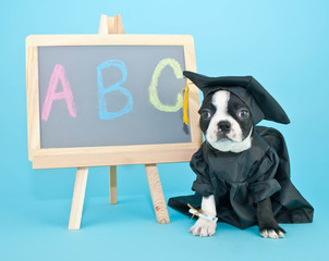 Wall Mural - Graduation Puppy