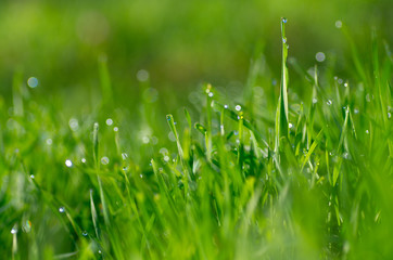 grass and beatiful bokeh