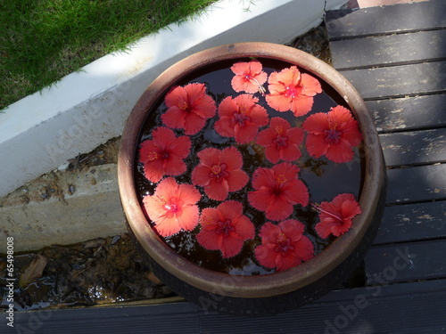 Wasserblume Stock Photo And Royalty Free Images On Fotoliacom