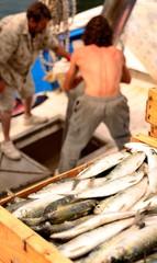 caja pescado