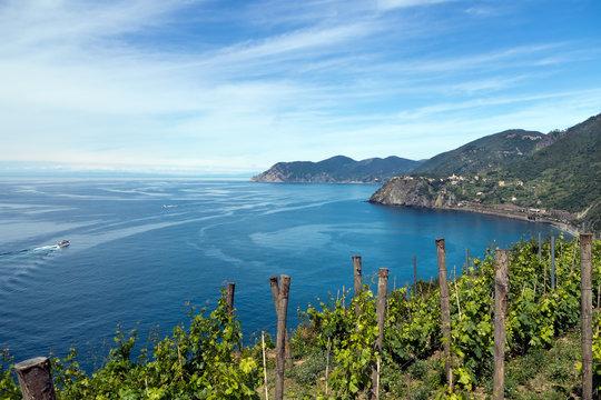 Italian landscape - Cinque Terre, Five Lands. Looking to Cornigl