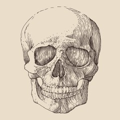 human skull, vintage illustration, engraved retro style