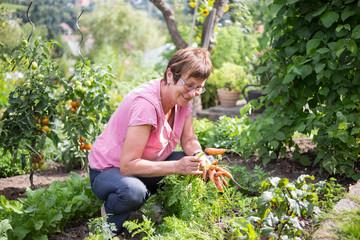 Frau erntet Möhren im Garten