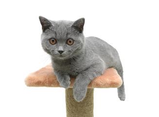 Kitten closeup on white background
