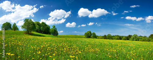 Wall mural Field with dandelions and blue sky