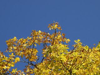 Herbstfarben - Hintergrundbild