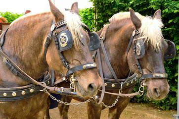 horses venaria, Turin, Italy