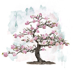 Pink Blossoming Tree