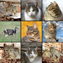 collection of images with domestic cats