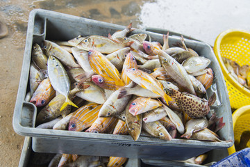 Variety sea fish in plastic box for sale