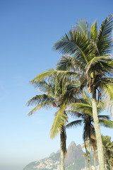 Rio de Janeiro Palm Trees Two Brothers Mountain Brazil