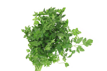 Bunch of fresh green parsley.