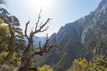Kreta - Griechenland - Baum vor der Samaria-Schlucht