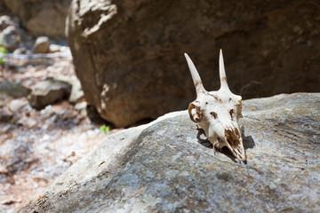Kreta - Griechenland - Totenkopf in der Samaria-Schlucht