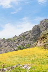 Kreta - Griechenland - Blumenwiese bei Plakias