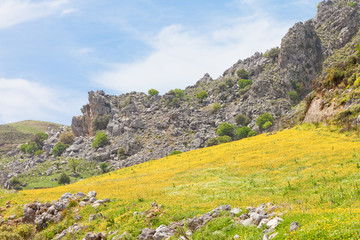 Kreta - Griechenland - Blütenmeer von Plakias Beach