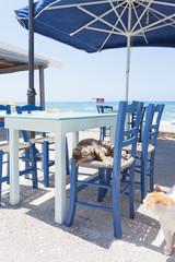 Kreta - Griechenland - Spielkameraden in Kalamaki