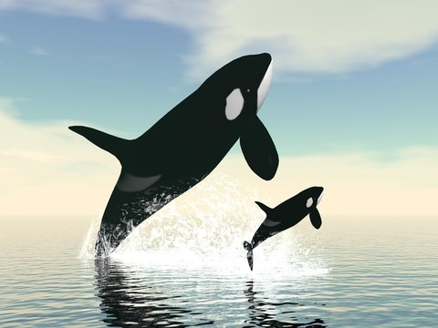 Killer whale mum and baby - 3D render