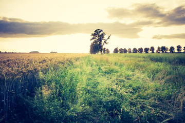vintage photo of sunset over summer field