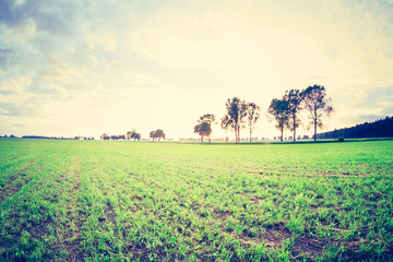 vintage photo of green field