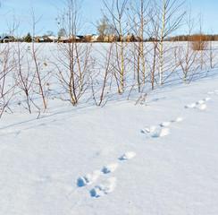 Fototapete - Whinter scene in Russia. Hare trace near village