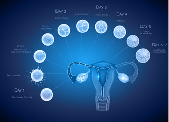 Embryo development abstract blue background. Development till bl