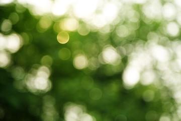 dark green and white background in sun light