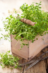fresh thyme herb in wooden box