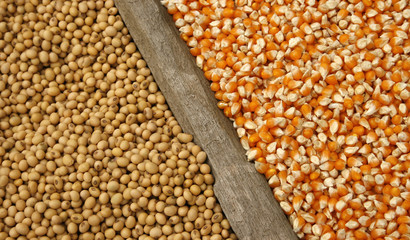 soybeans and corn seeds