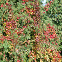 Leaves on trees in the autumn