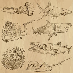 Underwater, Sea Life (vector set no.2) - hand drawn