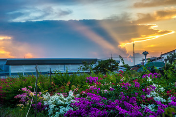 Flower and sunset