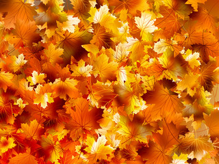 Colorful background of autumn leaves. EPS 10