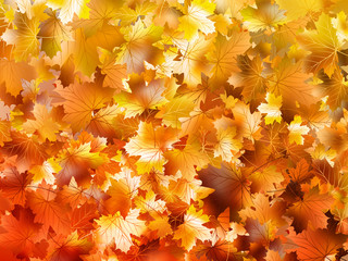 Colorful autumn leaves. EPS 10