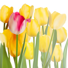 Bunch of tulips isolated on white. EPS 10