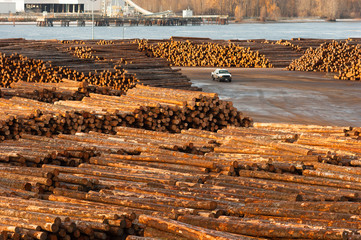 Large Timber Wood Log Lumber Processing Plant Riverside Columbia