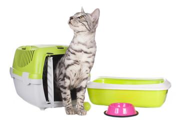 Cat litter box problems treatment
