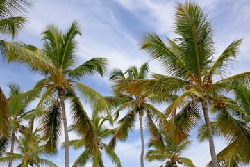 Group of Palm Trees
