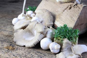 mushroom ensemble with wood billet