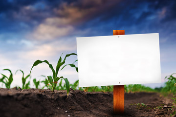 Wall Mural - Blank sign in corn agricultural field
