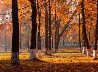 Foto op Aluminium Herfst autumn park