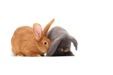two cute Easter bunny isolated on white background