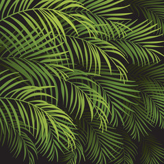 Poster Tropical Leaves background